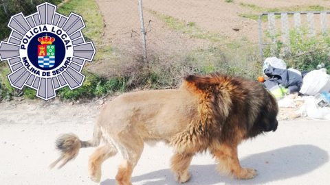 Police Alerted After Lion Sightings In Spanish Town – Find Out It's Actually A Dog | Country Music Videos