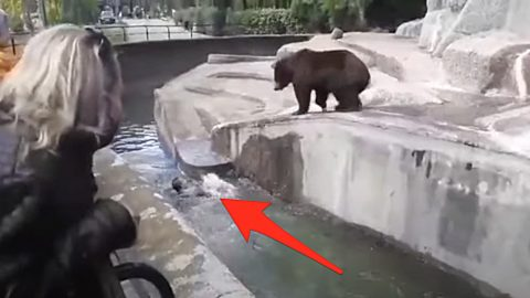 Drunk Man Charged $7000 After Jumping Into Bear's Zoo Enclosure | Country Music Videos