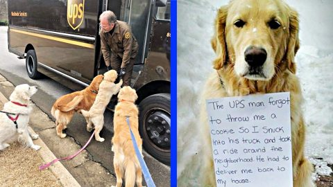 UPS Man Forgets To Give Dog Treat – Dog Jumps In Back Of His Truck | Country Music Videos