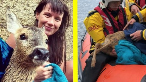 Woman Jumps Into Ocean To Save Struggling Deer | Country Music Videos