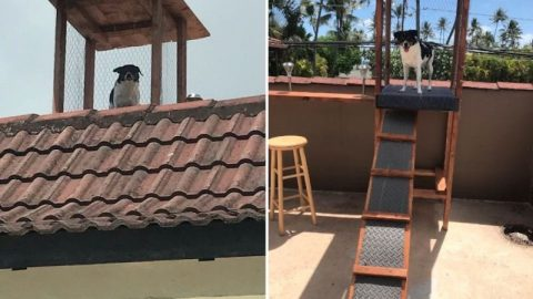 Dog Gets Watchtower Built On Roof To Keep An Eye On The Property | Country Music Videos