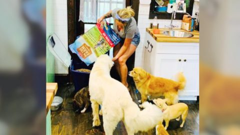 Miranda Lambert's Dogs & Kitten Help Show Off Her New Line Of Pet Food & Treats | Country Music Videos