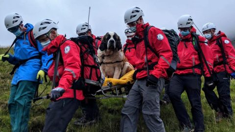 120-Pound Dog Rescued After She Collapsed On Mountain Hiking Trip   Country Music Videos