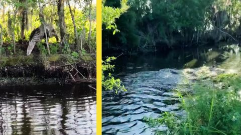 Passerby Catches Alligators Duking It Out In Florida Canal | Country Music Videos