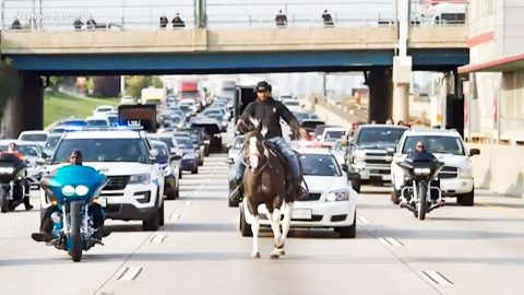 Cowboy Arrested After Riding Horse On Freeway During Rush Hour Traffic | Country Music Videos