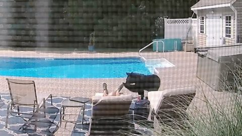 Video: Bear Sneaks Up On Man Sleeping By His Pool | Country Music Videos