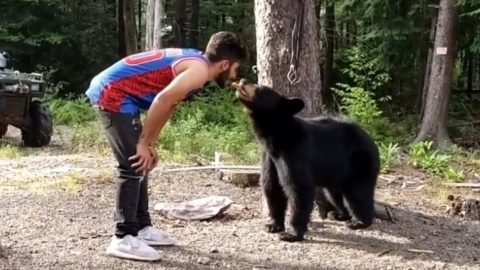 Man Feeds Wild Black Bear Cookies From His Mouth | Country Music Videos