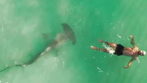 Drone Operator Finds 9ft Hammerhead Shark Lurking Under Swimmer | Country Music Videos