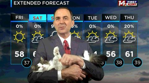 Meteorologist Gets Interrupted By Cat Mid-Report | Country Music Videos