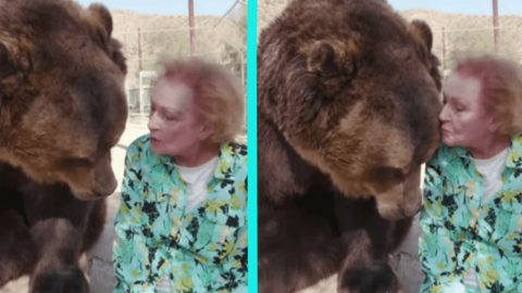 98-Year-Old Betty White Kisses Brown Bear   Country Music Videos