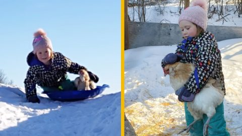 Chicken Wipes Out While Sledding   Country Music Videos