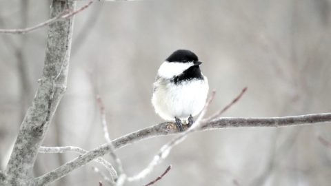 Due To Freezing Weather, Large Bird Populations Have Died Off In Texas | Country Music Videos