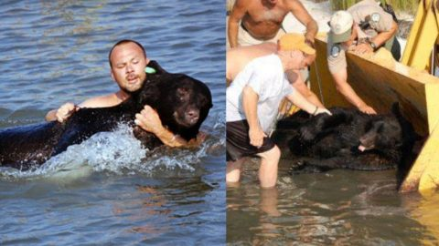 Man Saves 375-Pound Black Bear From Drowning | Country Music Videos