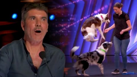 """Dancing Dogs' AGT Audition Makes Simon Cowell Exclaim """"Wow""""   Country Music Videos"""