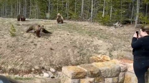 Woman Charged With 2 Criminal Offenses For Filming Grizzly Too Close   Country Music Videos
