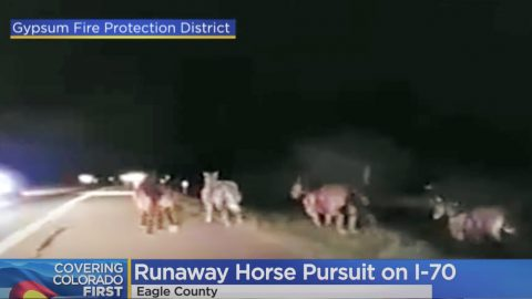 Horses Escape Rodeo, Get Chased Down By Cowboys & State Troopers | Country Music Videos