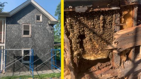 Family Buys Home In Fall & Finds It Infested With 450k Bees In Spring   Country Music Videos